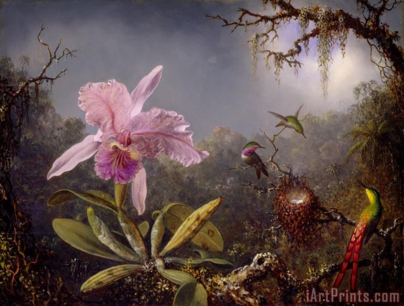 Cattleya Orchid And Three Hummingbirds painting - Martin Johnson Heade Cattleya Orchid And Three Hummingbirds Art Print