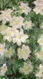 White Clematis by Claude Monet