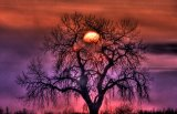 Sunrise Through The Foggy Tree by Collection 14