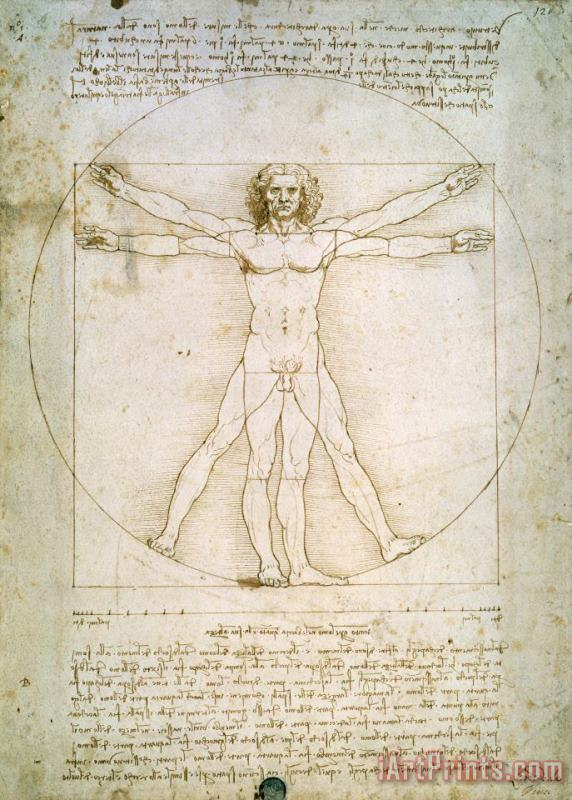 Leonardo da Vinci The Proportions of the human figure Art Print