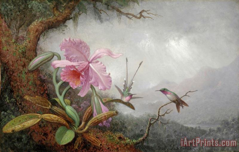 Hummingbirds And Orchids painting - Martin Johnson Heade Hummingbirds And Orchids Art Print