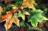 Sycamore Leaves by Paul Dene Marlor