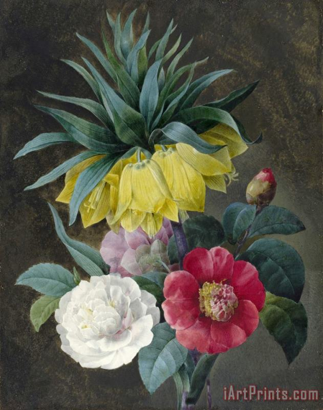 Four Peonies And a Crown Imperial painting - Pierre Joseph Redoute Four Peonies And a Crown Imperial Art Print