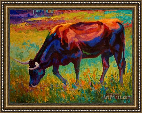 Marion Rose Grazing Texas Longhorn Framed Print