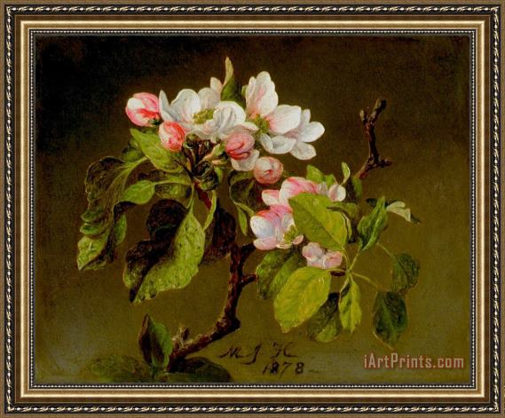 Martin Johnson Heade A Branch of Apple Blossoms And Buds Framed Print