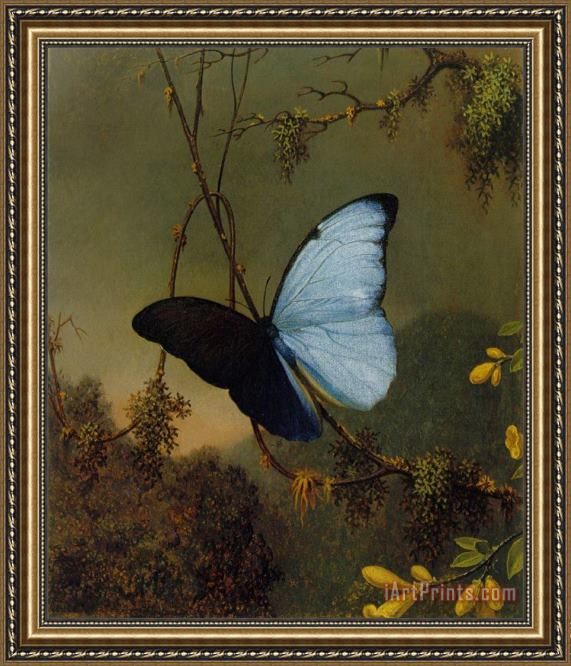 Martin Johnson Heade Blue Morpho Butterfly Framed Print