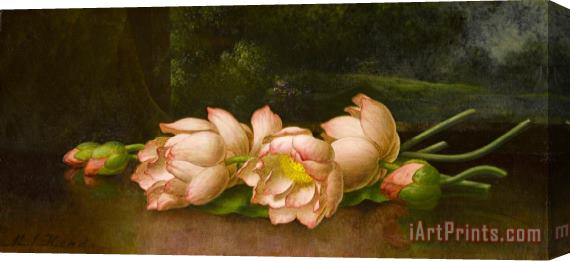 Martin Johnson Heade Lotus Flowers a Landscape Painting in The Background Stretched Canvas Print / Canvas Art
