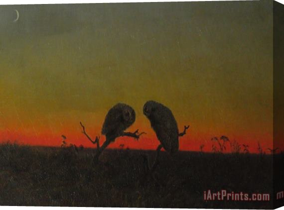 Martin Johnson Heade Two Owls at Sunset Stretched Canvas Print / Canvas Art