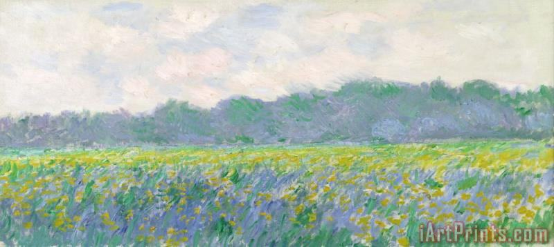 Claude Monet Field of Yellow Irises at Giverny Art Print