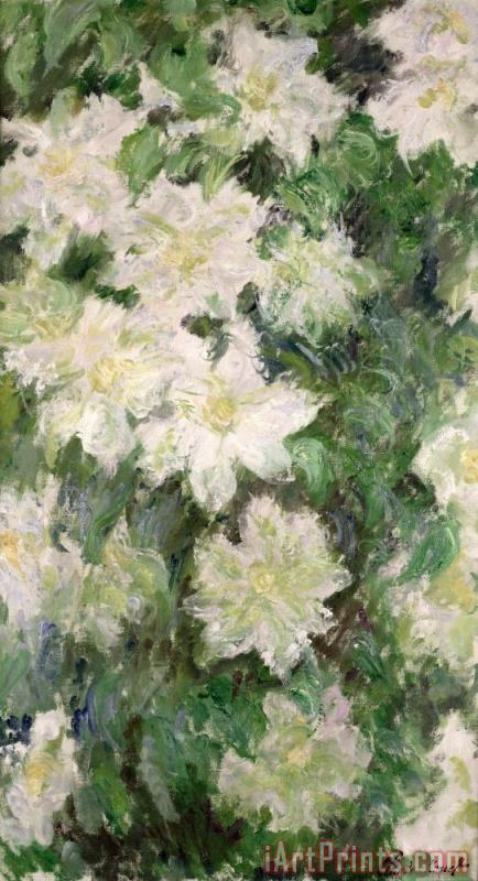 Claude Monet White Clematis Art Print