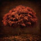 The Tree that knew me by Collection 5