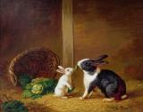 Two Rabbits by H Baert
