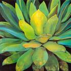 Agave by Jillian David