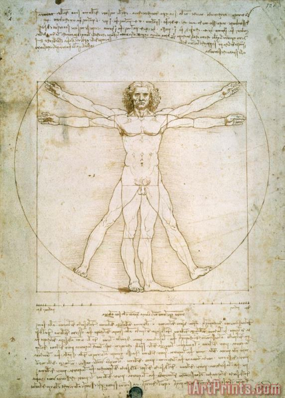 The Proportions of the Human Figure painting - Leonardo da Vinci The Proportions of the Human Figure Art Print