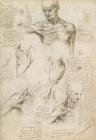 Anatomical Drawing Of Shoulder And Neck by Leonardo da Vinci