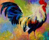 Eye Candy - Rooster by Marion Rose