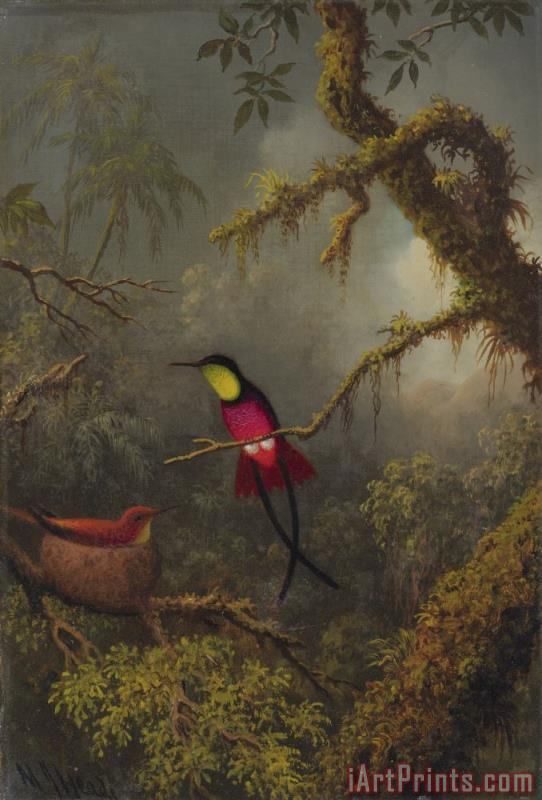 Martin Johnson Heade A Pair of Nesting Crimson Topaz Hummingbirds Art Print