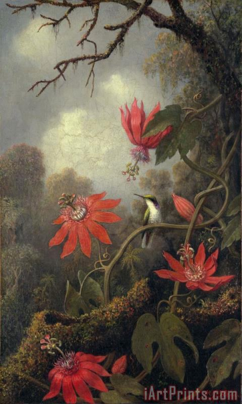 Martin Johnson Heade hummingbird and passion flowers Art Print