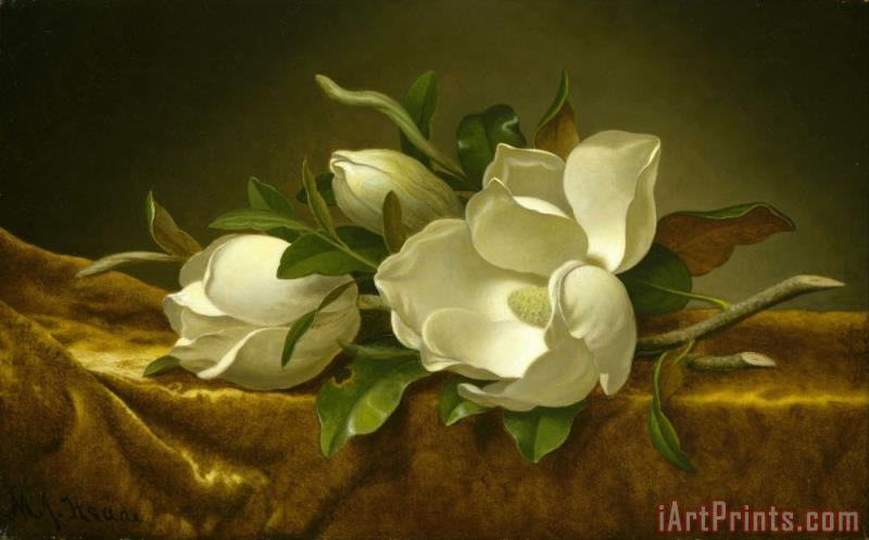 Magnolias on Gold Velvet Cloth painting - Martin Johnson Heade Magnolias on Gold Velvet Cloth Art Print