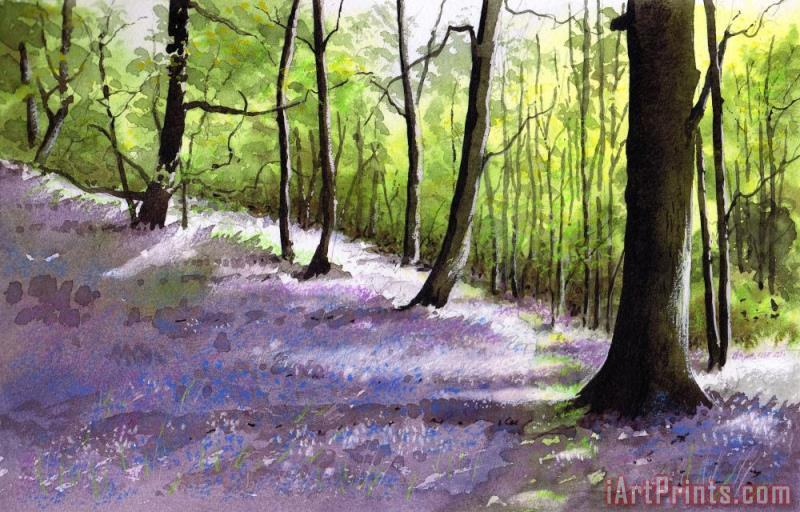 Bluebell wood painting - Paul Dene Marlor Bluebell wood Art Print