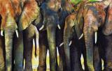 Elephant Herd by Paul Dene Marlor