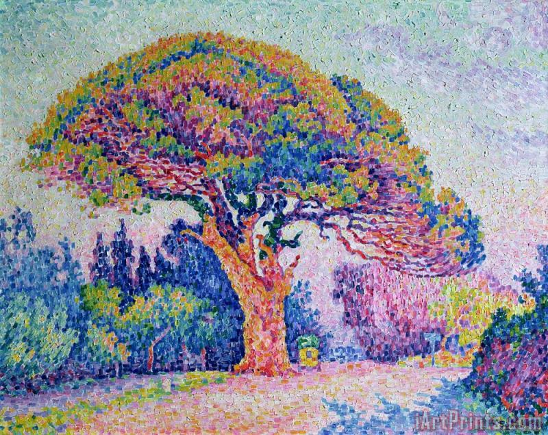 The Pine Tree at Saint Tropez painting - Paul Signac The Pine Tree at Saint Tropez Art Print