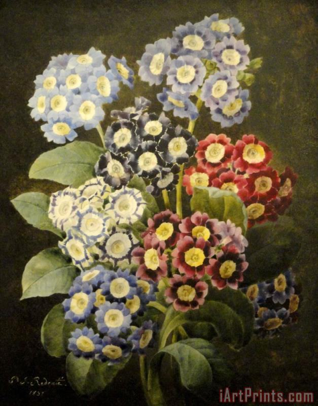 A Bouquet of Auriculas painting - Pierre Joseph Redoute A Bouquet of Auriculas Art Print