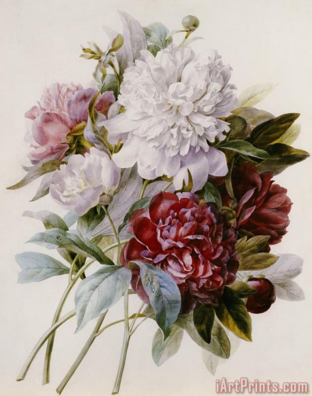 Pierre Joseph Redoute A Bouquet Of Red Pink And White Peonies Art Print