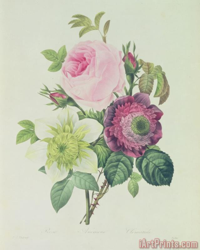 Rose painting - Pierre Joseph Redoute Rose Art Print